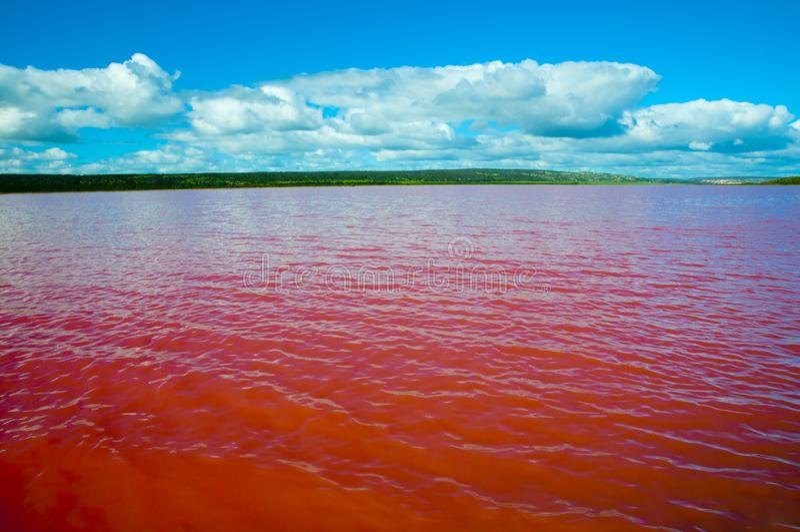 Lago pink de la laguna de Hutt imagen de archivo libre de regalías