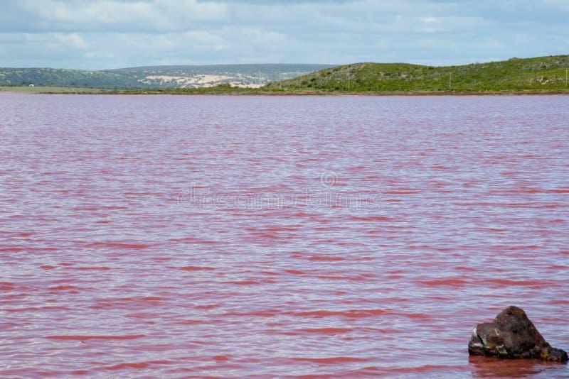 Lago pink de la laguna de Hutt foto de archivo libre de regalías