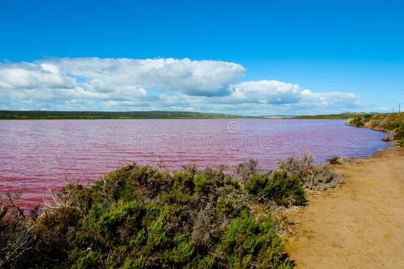 Lago pink de la laguna de Hutt foto de archivo