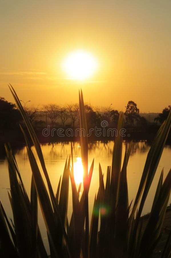 Lago, plantas e por do sol imagem de stock royalty free
