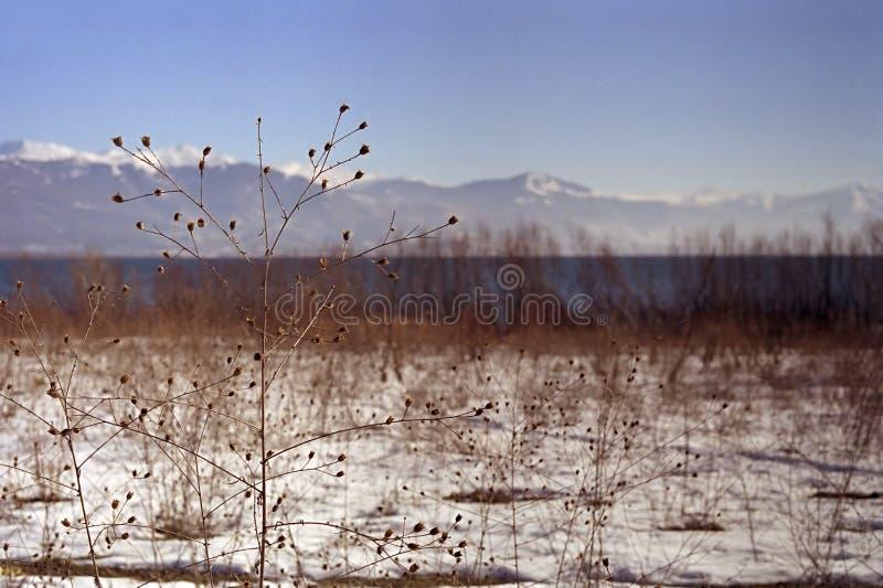 Download Lago Prespa fotografia stock. Immagine di skopje, guasto - 201768