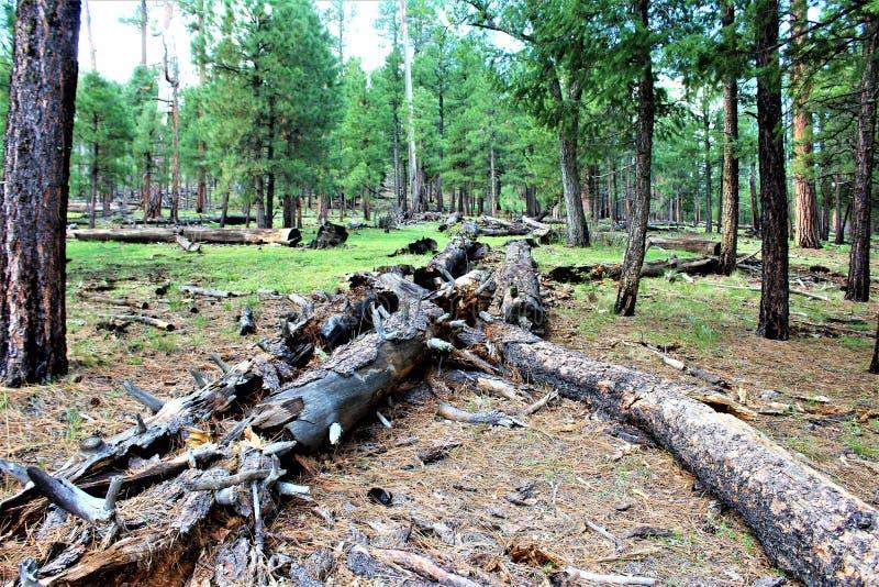 Lago preto canyon, Navajo County, o Arizona, Estados Unidos, floresta nacional de Apache Sitegreaves fotos de stock