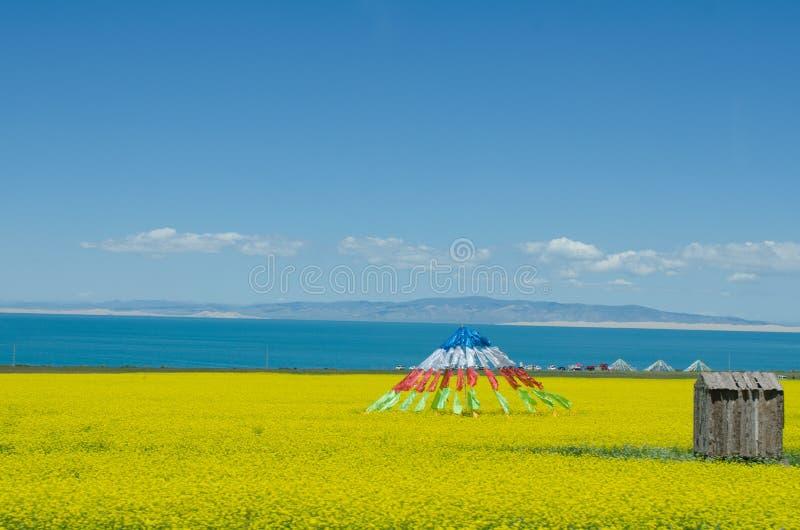 Lago Qinghai e flor da violação foto de stock royalty free
