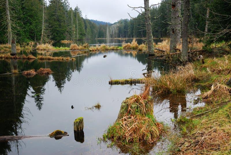 Lago rain forest fotografie stock libere da diritti