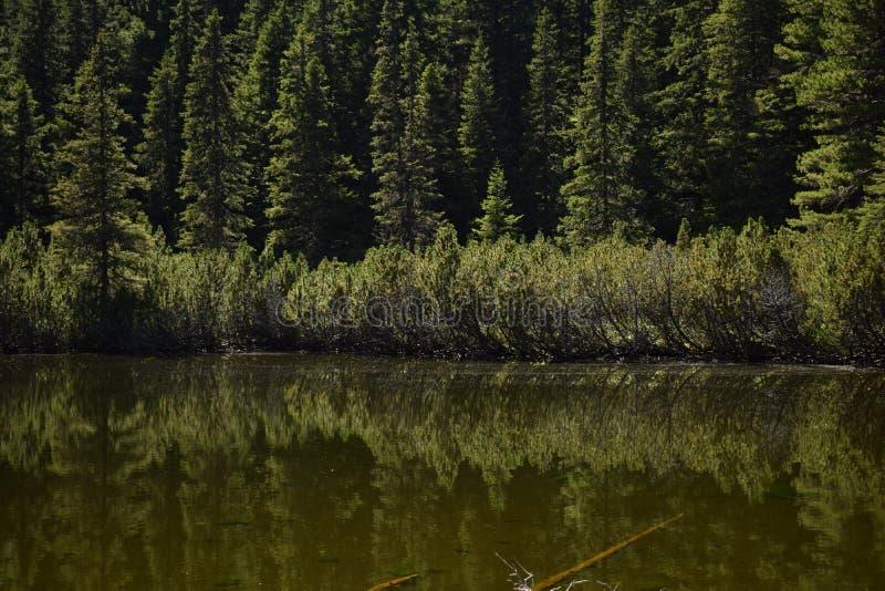 Lago Retezat - lago do brazi do dintre de Taul entre árvores foto de stock