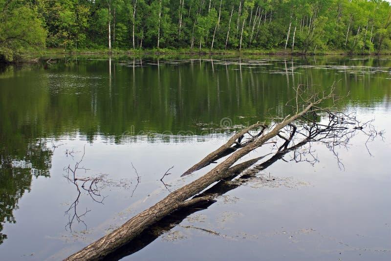 Lago rice fotografia de stock royalty free