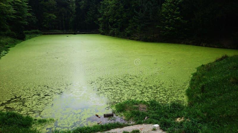 Lago riempito di piante acquatiche fotografia stock libera da diritti