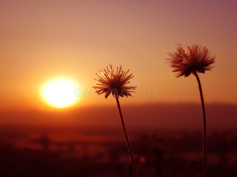 Lago rojo myanmar del inle del estado de la montaña de la flor de la puesta del sol imagen de archivo libre de regalías