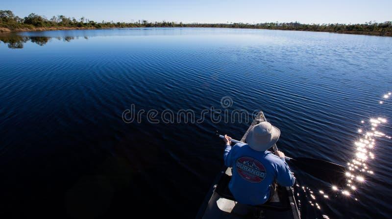 Lago roost do busardo - pântano de Okefenokee foto de stock