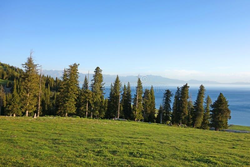 Lago Sailimu con el árbol spruce en verano foto de archivo