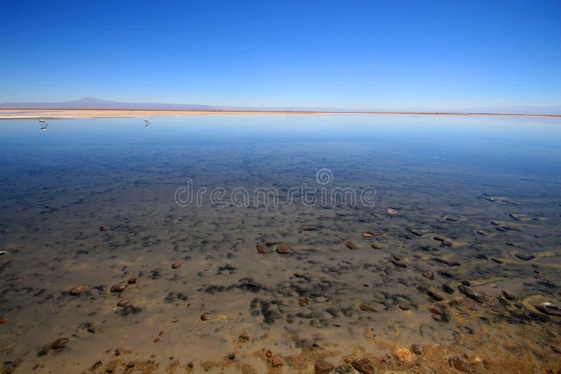 Lago salado en el desierto de Atacama imágenes de archivo libres de regalías