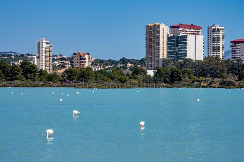Lago Salinas de Las em Calpe, Espanha com alguns flamingos imagens de stock royalty free