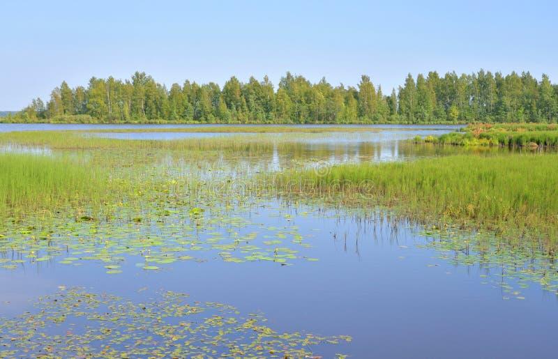 Lago Sestroretsky Razliv wetland foto de archivo libre de regalías