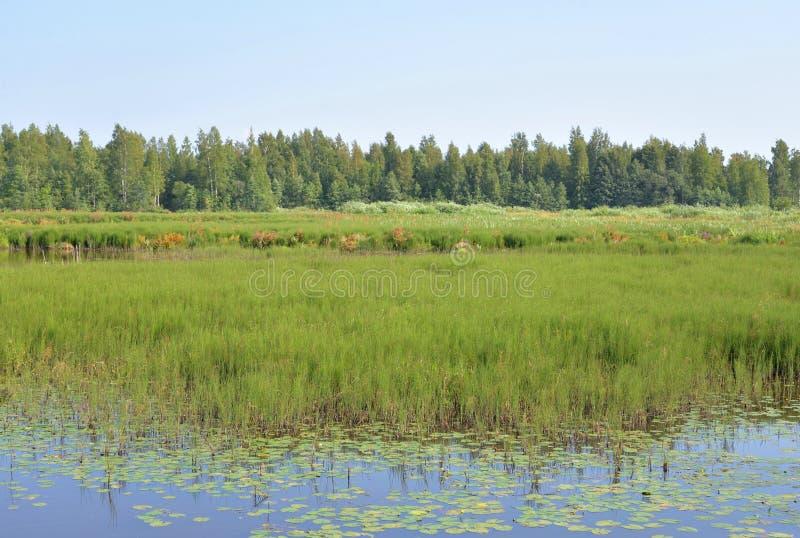 Lago Sestroretsky Razliv wetland imágenes de archivo libres de regalías