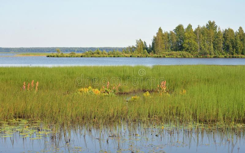 Lago Sestroretsky Razliv wetland foto de archivo