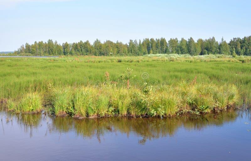 Lago Sestroretsky Razliv wetland fotos de archivo
