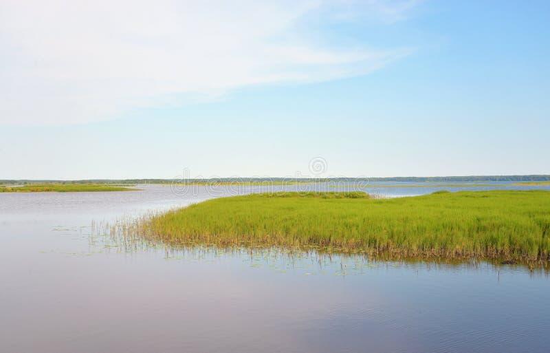 Lago Sestroretsky Razliv wetland fotografía de archivo