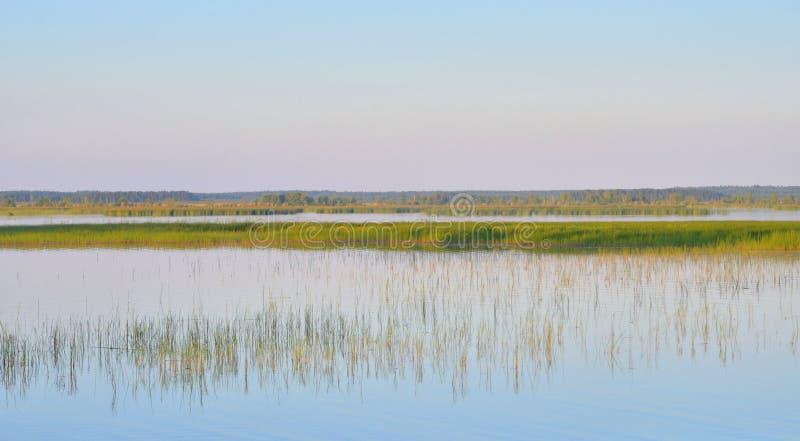 Lago Sestroretsky Razliv wetland en la puesta del sol imagenes de archivo
