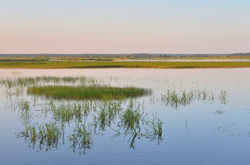 Lago Sestroretsky Razliv wetland en la puesta del sol foto de archivo
