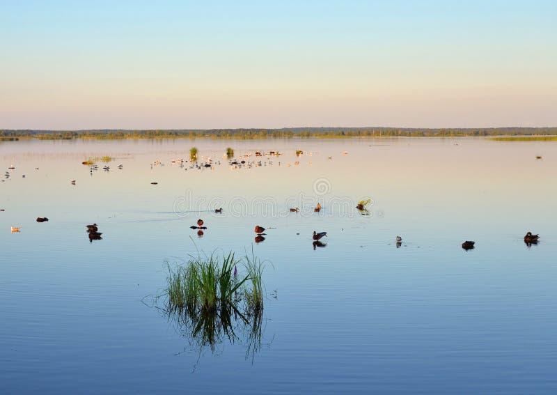 Lago Sestroretsky Razliv wetland en la puesta del sol fotografía de archivo libre de regalías