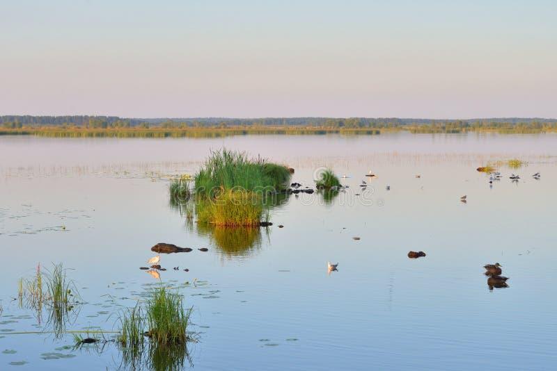 Lago Sestroretsky Razliv wetland en la puesta del sol imagen de archivo libre de regalías