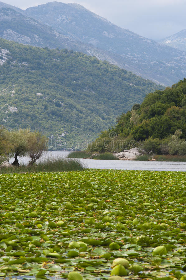 Lago Skadar imagenes de archivo