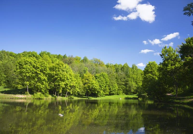 Lago in sosta, anatra fotografia stock