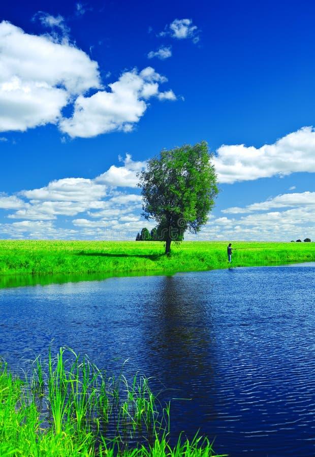 Lago sul campo di estate fotografia stock libera da diritti