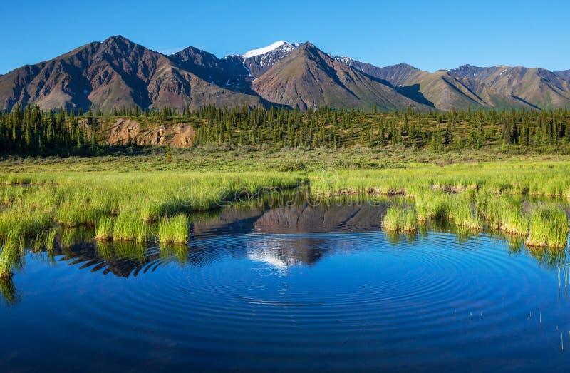 Lago sull'Alaska fotografia stock libera da diritti