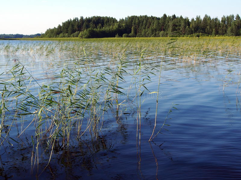 Lago Svezia Siljan fotografia stock libera da diritti