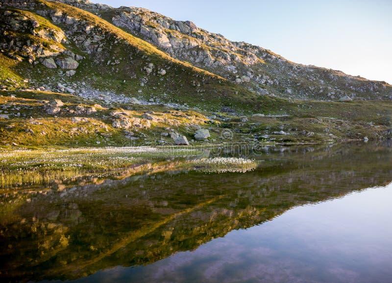 Lago svizzero Grimsel della montagna delle alpi con il eriophorum dei cottongrass fotografie stock libere da diritti