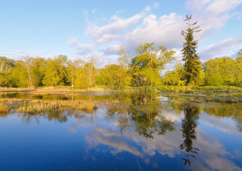 Lago swamp e foresta verde immagine stock libera da diritti
