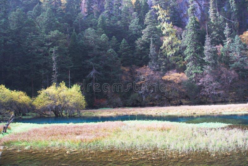 Lago swan de Jiuzhaigou foto de stock