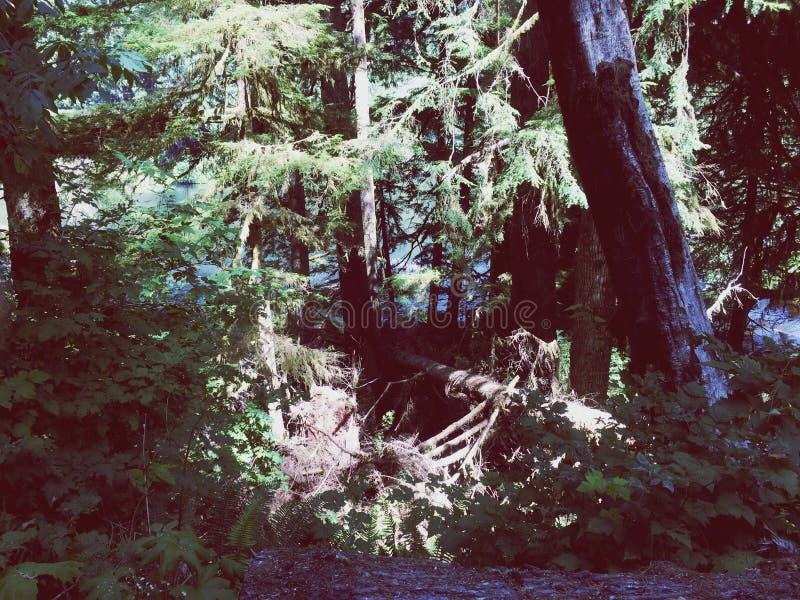 Lago Sylvia Forest imagen de archivo