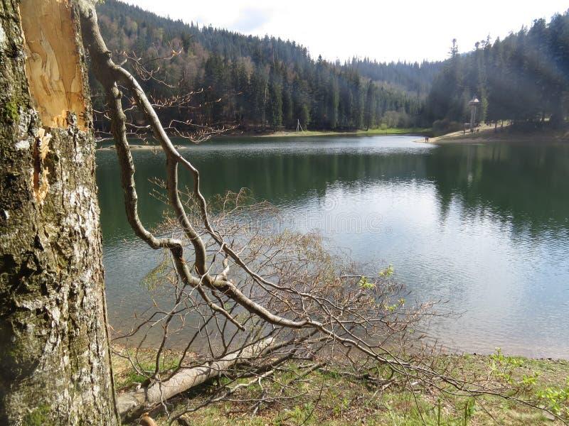Lago Synevir nelle montagne immagini stock libere da diritti