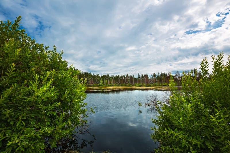 Lago Taiga Sibéria, Rússia imagem de stock royalty free