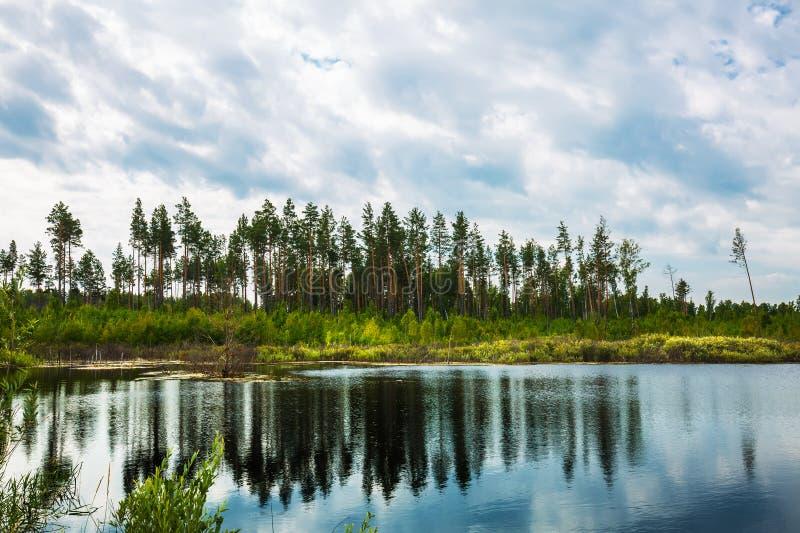 Lago Taiga Sibéria, Rússia imagens de stock royalty free