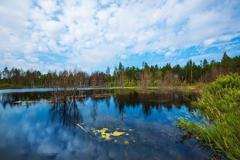 Lago Taiga Sibéria, Rússia imagem de stock