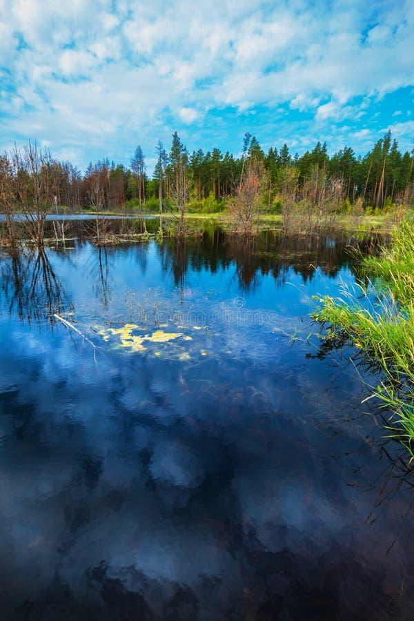 Lago Taiga Sibéria, Rússia imagens de stock