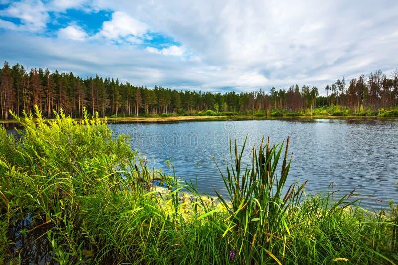 Lago Taiga Sibéria, Rússia fotografia de stock royalty free