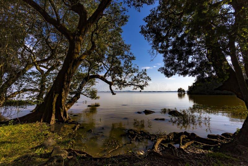 Lago Tana, Etiópia imagens de stock