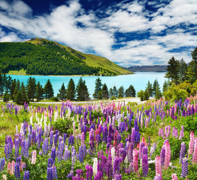 Lago Tekapo, Nueva Zelandia imagen de archivo