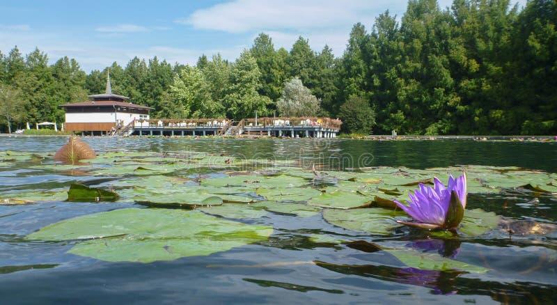 Lago termico in Heviz in Hungar fotografia stock libera da diritti