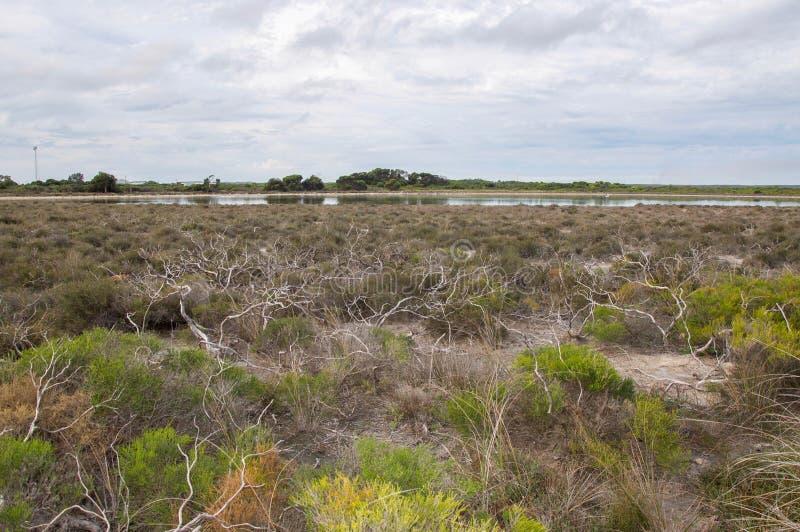 Lago Thetis com Bushland fotos de stock