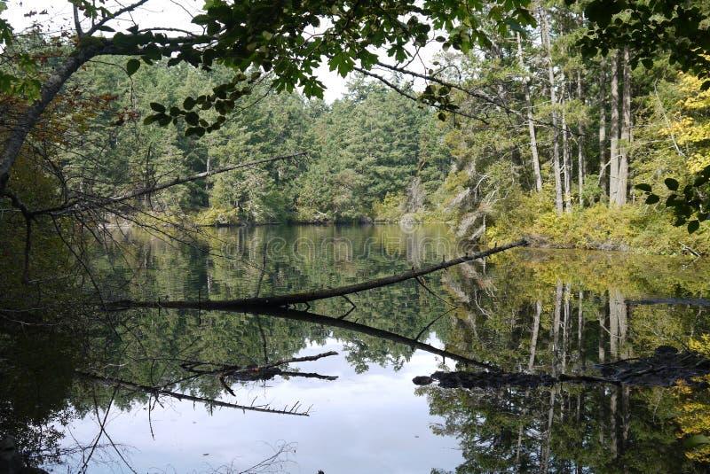 Lago thetis, vicino a Victoria, il Canada fotografie stock