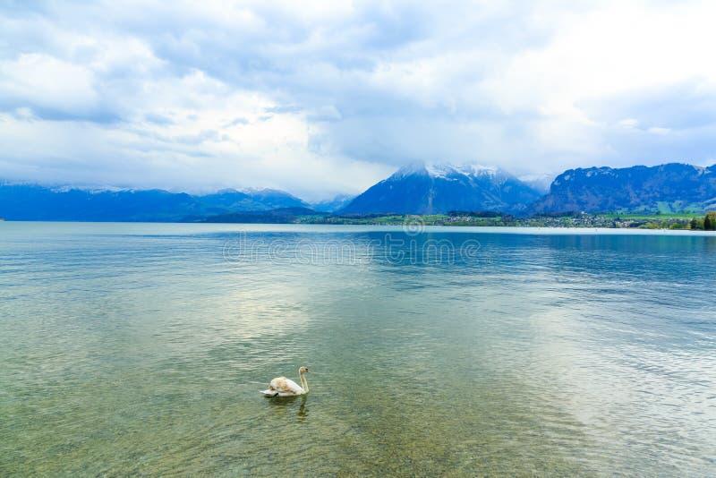 Lago Thun e montagne delle alpi nella città di Thun, Svizzera immagine stock libera da diritti