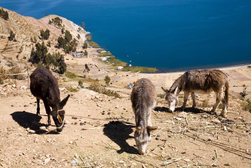 Lago Titicaca, Bolivia fotografia stock libera da diritti