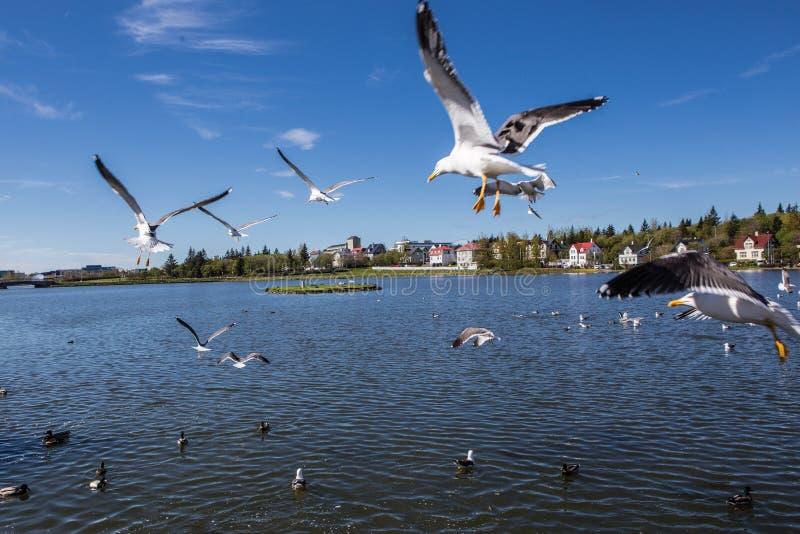 Lago Tjornin foto de archivo