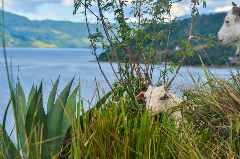 Lago Toba, Sumatra norte, Indonésia imagens de stock