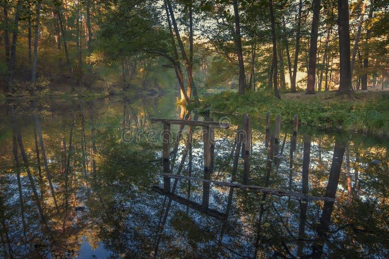 Lago Tranquil no fundo do parque foto de stock royalty free